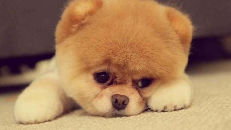 강아지 강씨 연예인.jpg | 인스티즈