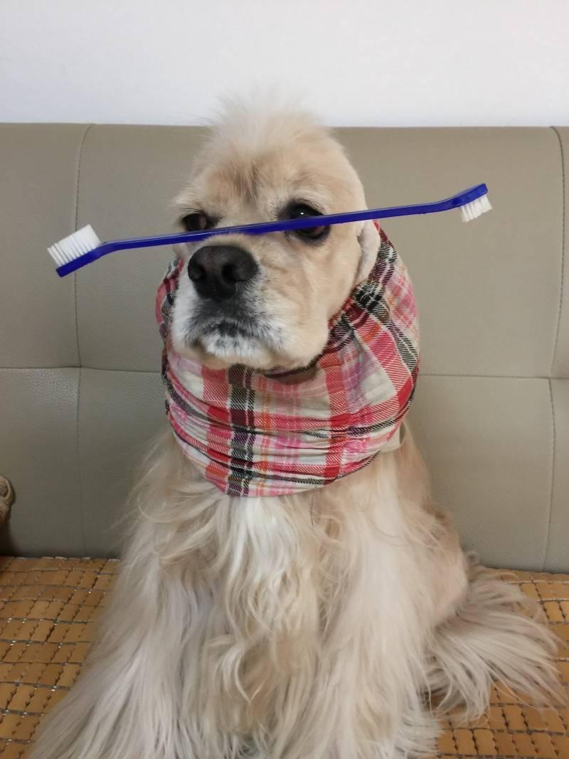강아지한테 미안한데 | 인스티즈