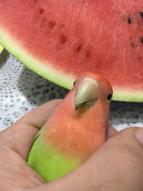 수박으로 앵무새를 조각한 디씨인 | 인스티즈