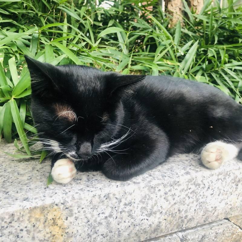 회사 흡연장 고양이 | 인스티즈