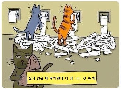 고양이 운동.jpg | 인스티즈