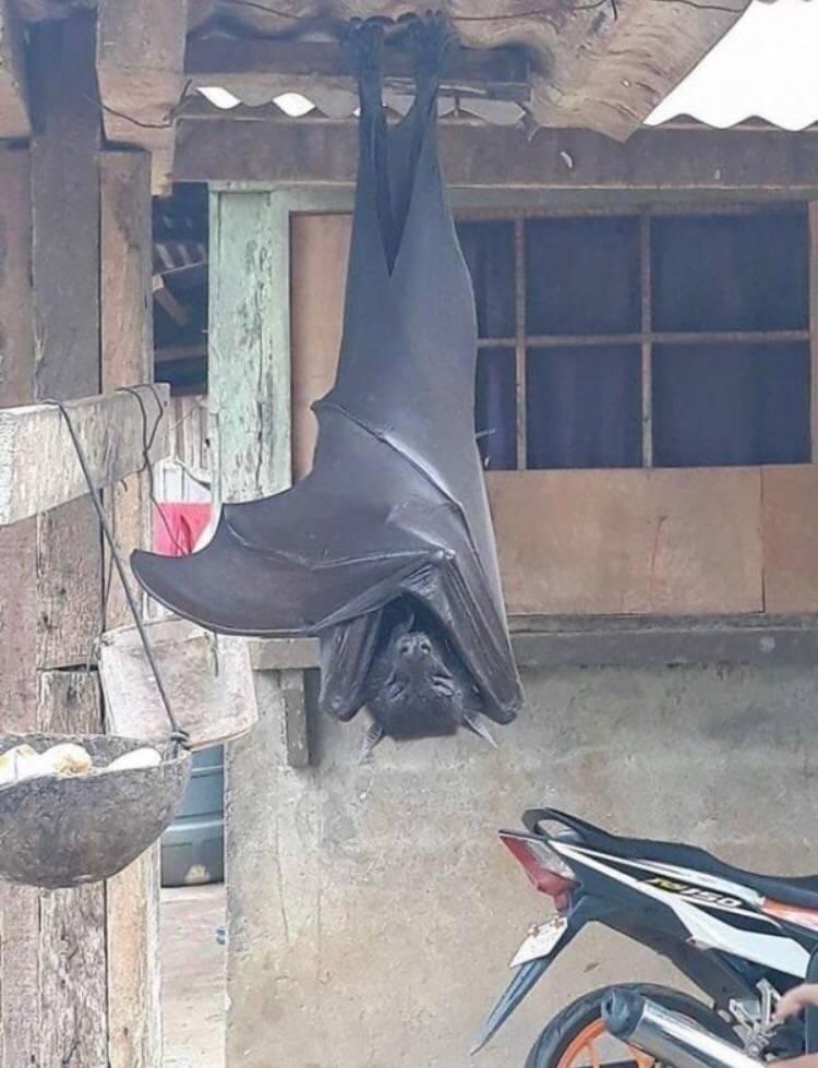 와 나 박쥐 검색하다가 이거 봄 (박쥐 사진 있음) | 인스티즈