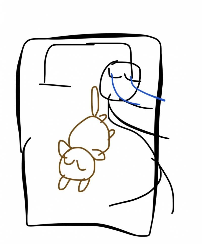 강아지랑 같이 자는데 나 자세 ㄹㅇ 불편.. | 인스티즈