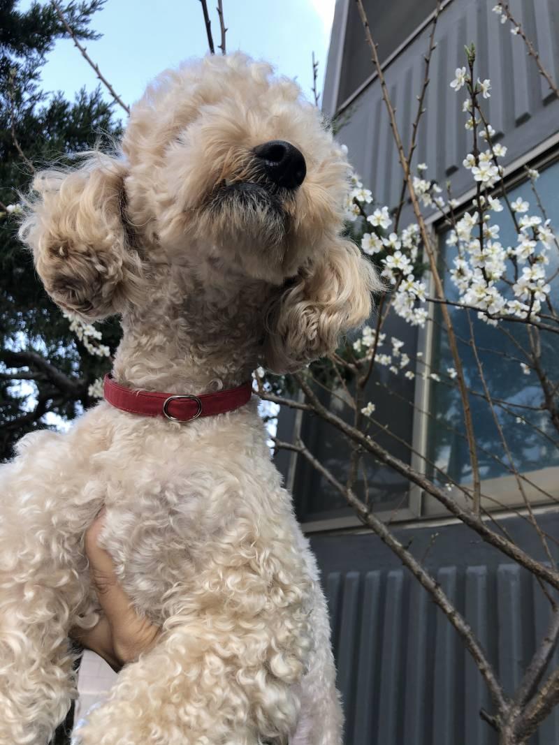 강아지랑 꽃 사진 찍기 힘들다   인스티즈