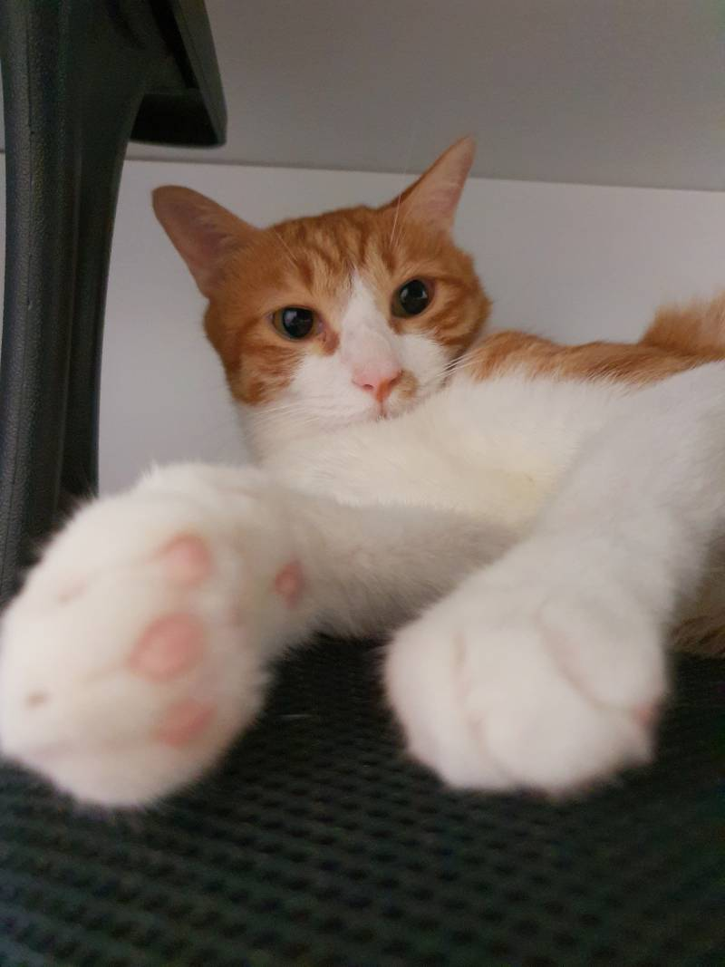 심심해서 고양이 발 핥아봤는데 | 인스티즈