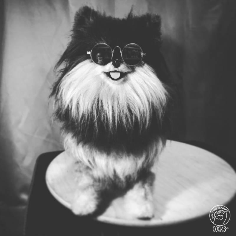 BTS 뷔 강아지 연탄이가 14마리 고양이의 집에 온다면? (가상반응) | 인스티즈