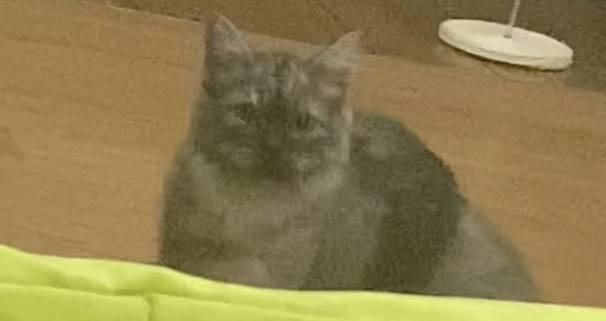 우리 집 고양이 진짜 낯가리거든 | 인스티즈
