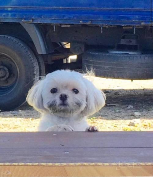 군고구마 훔쳤다가 들켜버린 강아지.jpg | 인스티즈