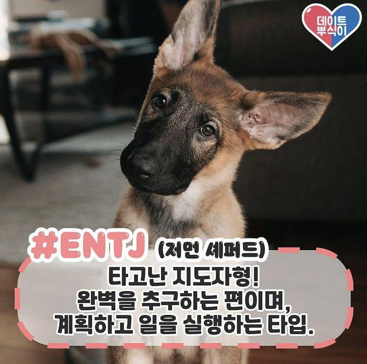 mbti별 강아지 유형이래🐶🐶 | 인스티즈