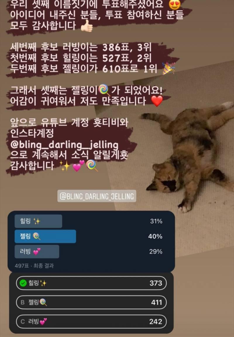오늘자 전효성이 냥줍한 삼색고양이........JPG | 인스티즈