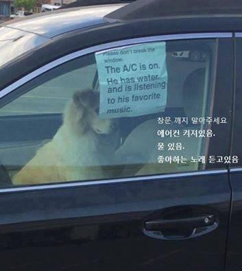 강아지를 차에 놓고 내린 주인의 안내문 | 인스티즈