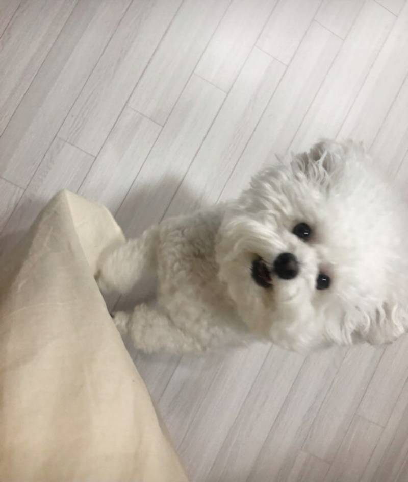 우리집 댕댕이 모델 데뷔했어! | 인스티즈