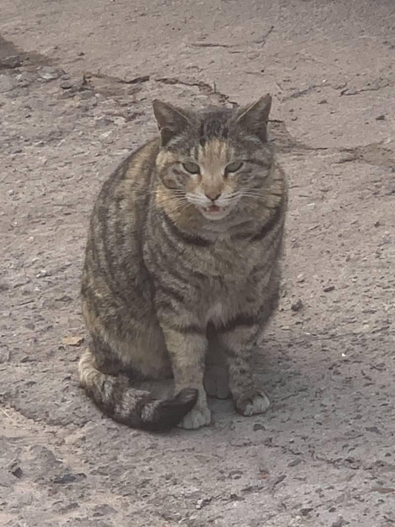 회사 앞에 고양인데 가까이 가면 냐~ 하고 우눈데ㅠㅠ | 인스티즈