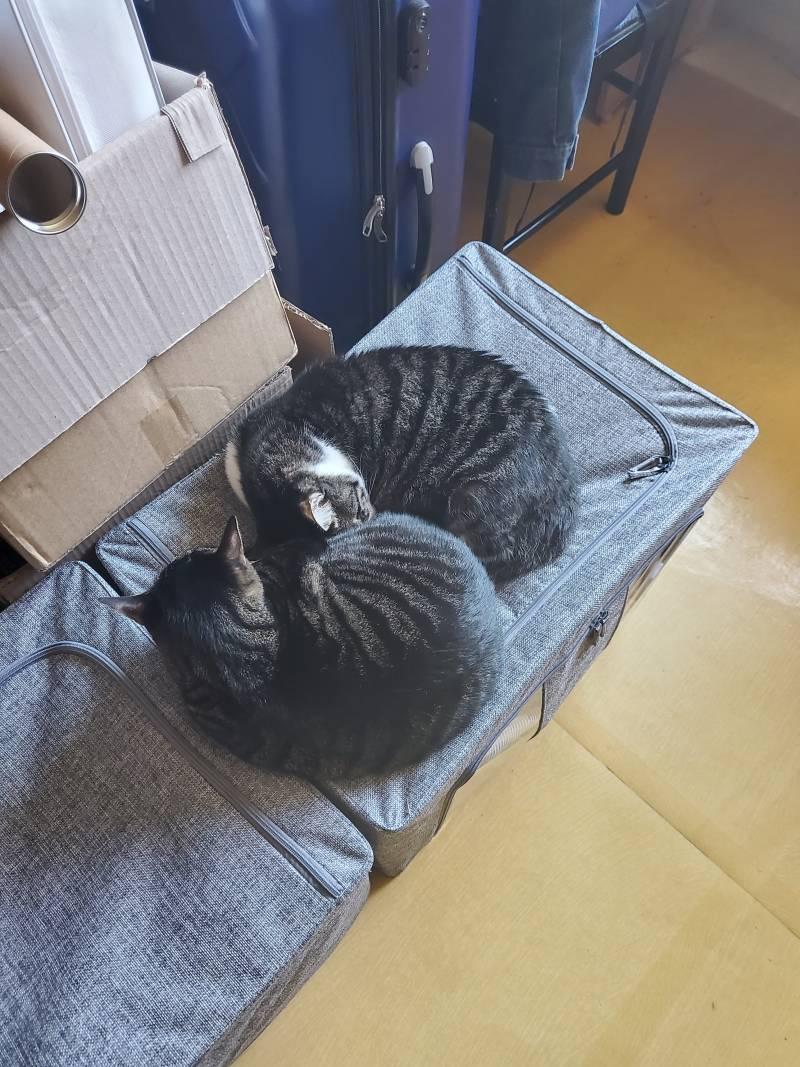 우리집 고양이들 자랑하고 싶어서 올리는 글 | 인스티즈