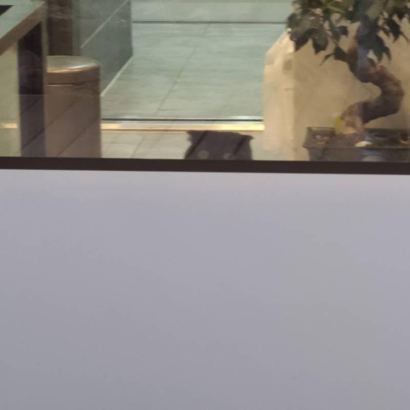 동물병원 지나가다 세상 구경하는 고양이랑 눈마주쳤어   인스티즈
