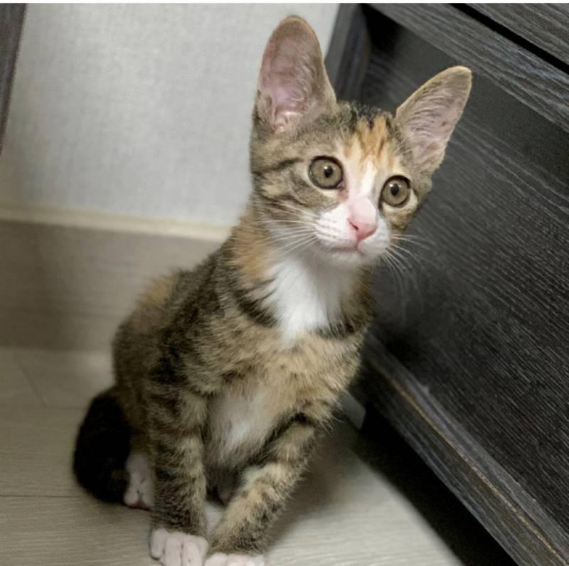 고양이 이름 지어줄 사람!!! 40 | 인스티즈