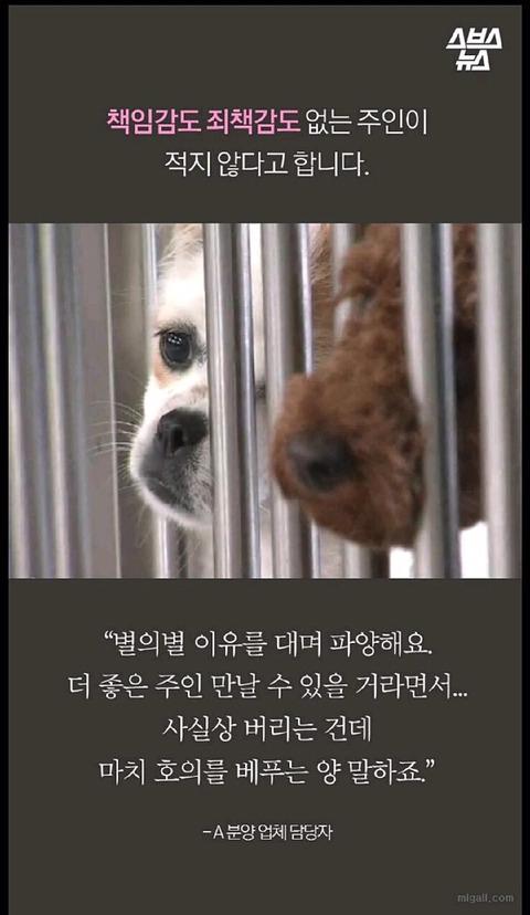 특히 우리나라에서 심한 강아지 유행 | 인스티즈
