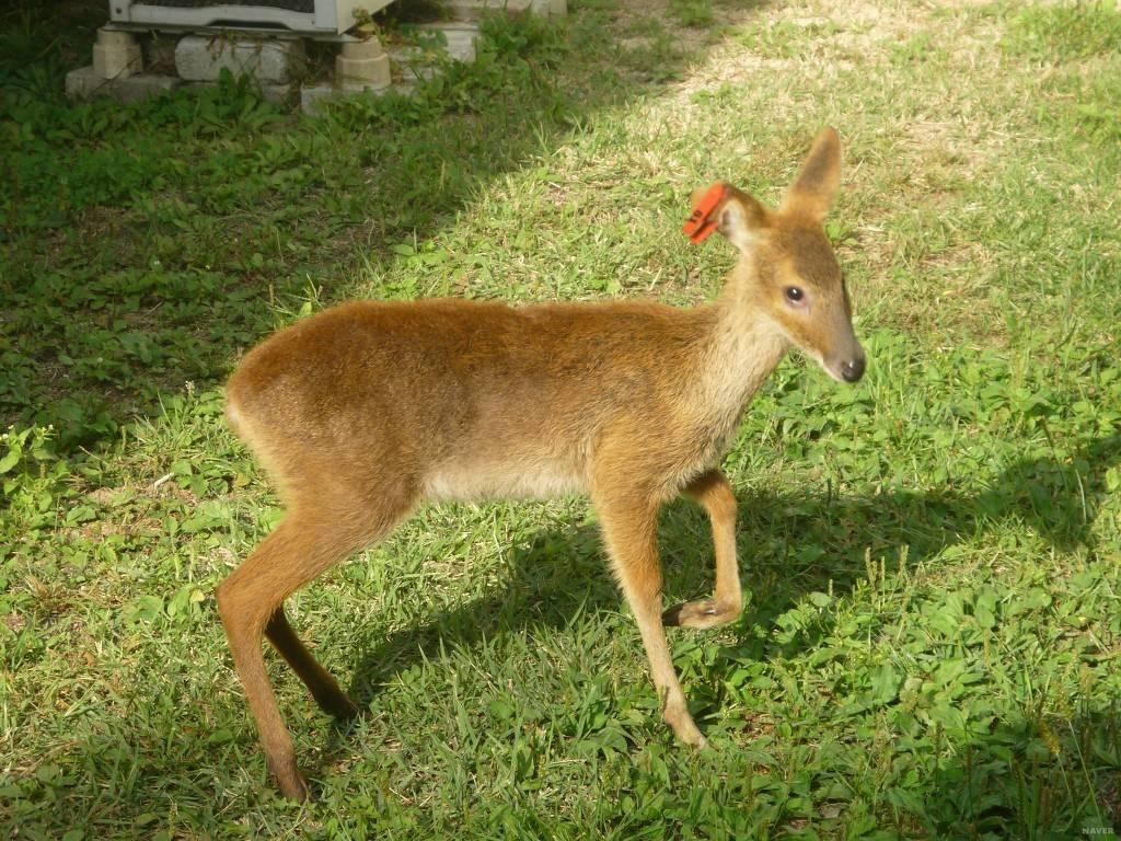 세계 멸종 위기 동물이지만 한국에서 쌍욕 는 동물 | 인스티즈
