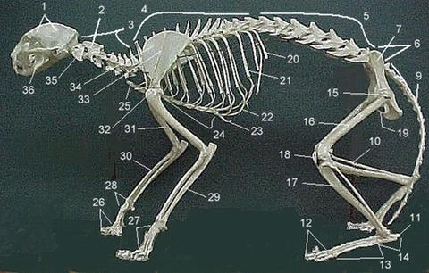 멈뭄미 뼈와 고먐미 뼈의 차이 | 인스티즈