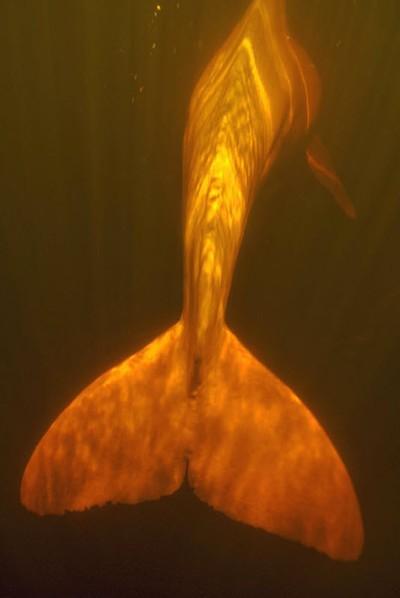 아마존강의 돌고래들 | 인스티즈