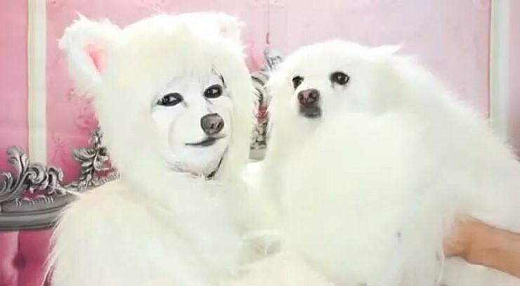 강아지 메이크업 .jpg | 인스티즈