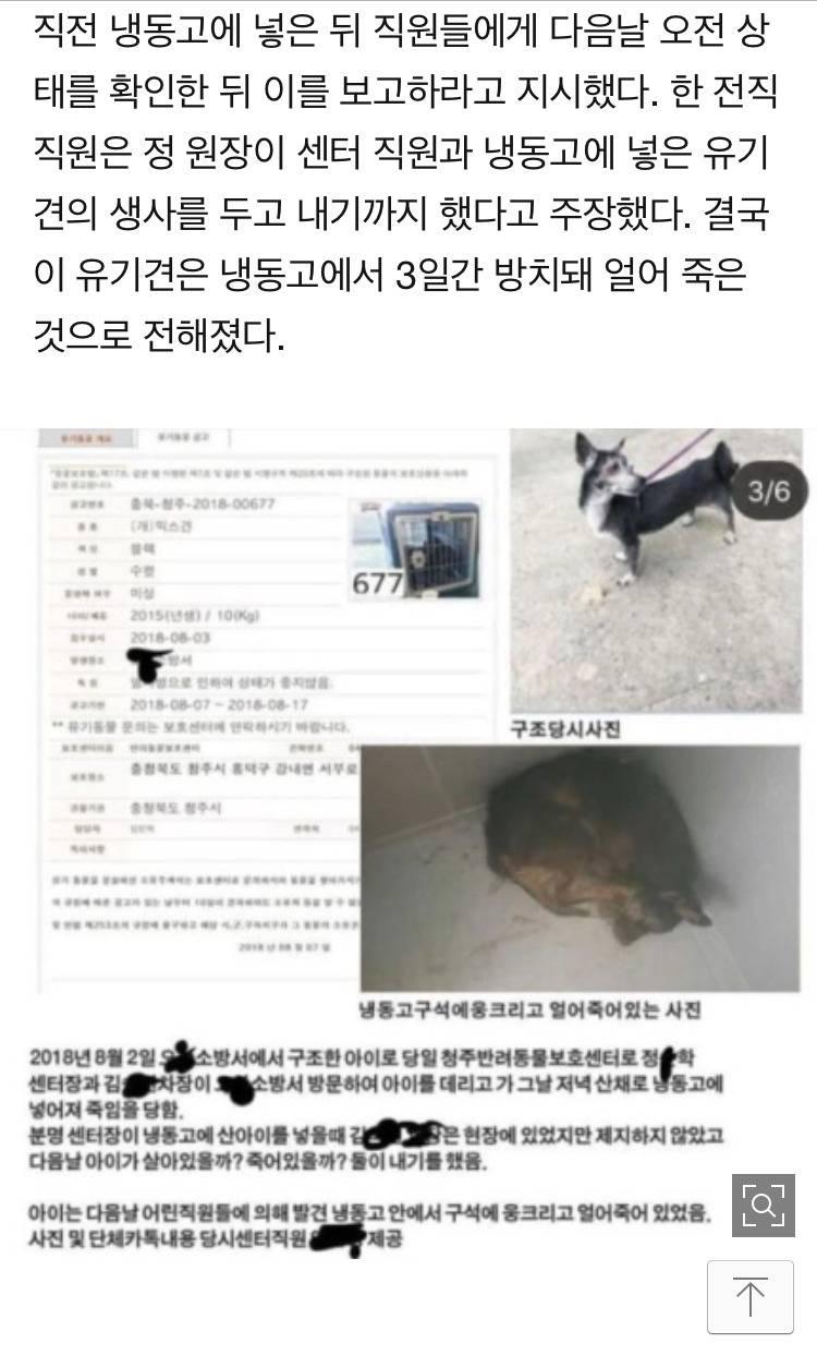 냉동고에 개를 얼려죽인 유기견보호소장 | 인스티즈