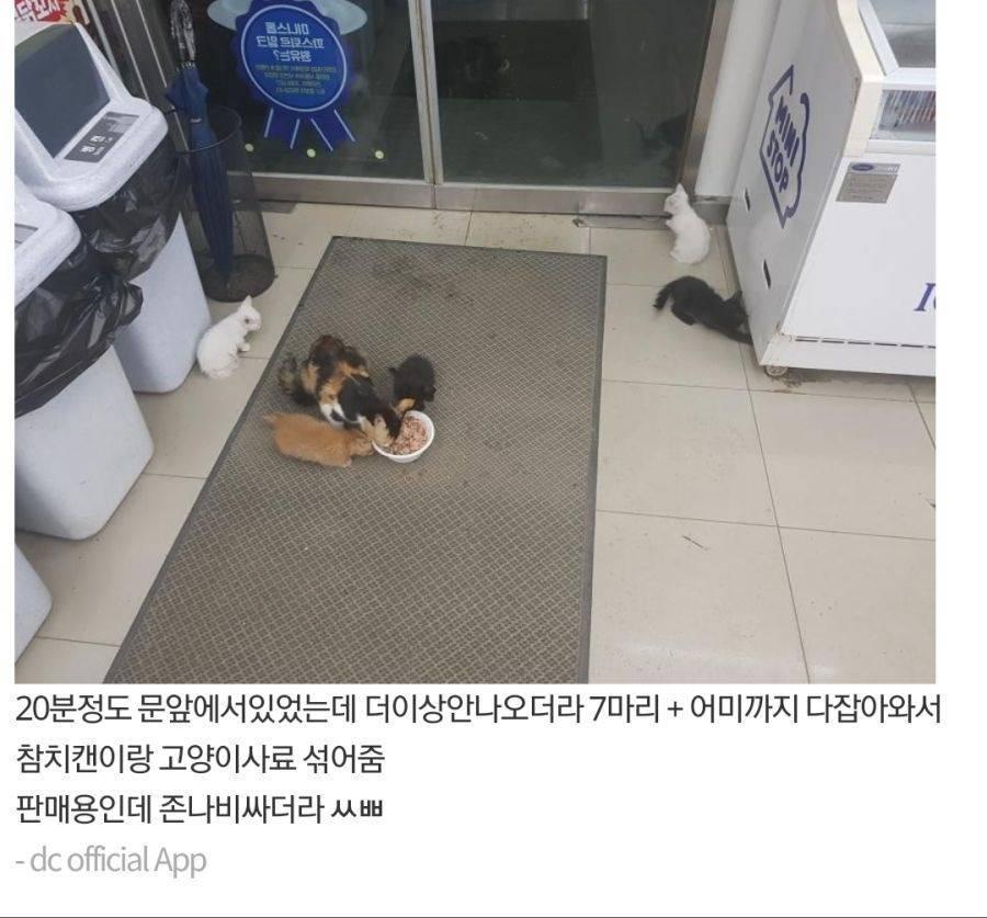 고양이 가족 납치한 디씨갤러 | 인스티즈