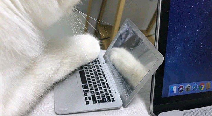 고양이 방해방지용 노트북...jpg   인스티즈