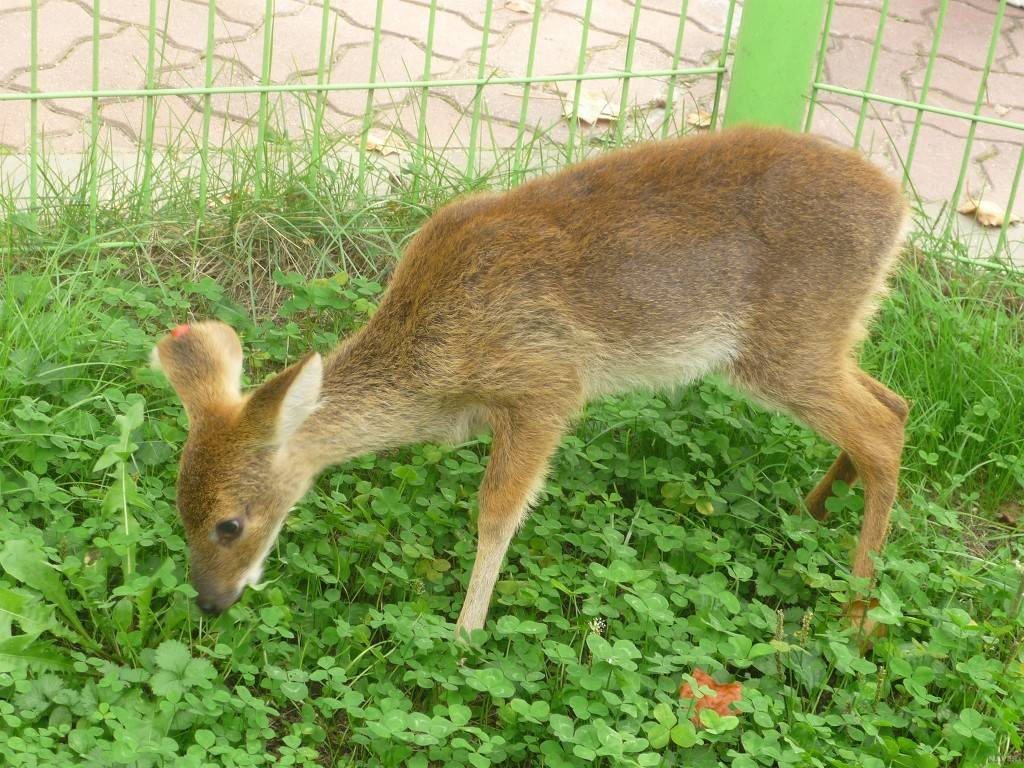 세계 멸종 위기 동물이지만 한국에서 쌍욕 는 동물   인스티즈