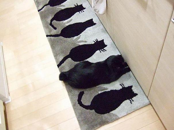 당신은 절대 고양이를 발견할 수 없을 것 | 인스티즈