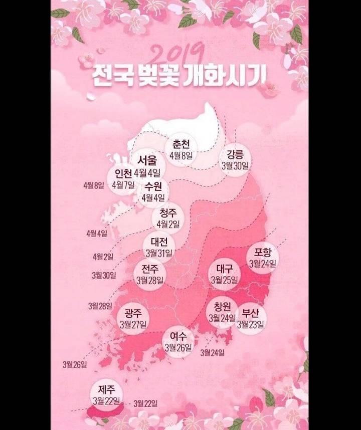 2019 전국 벚꽃 개화시기   인스티즈