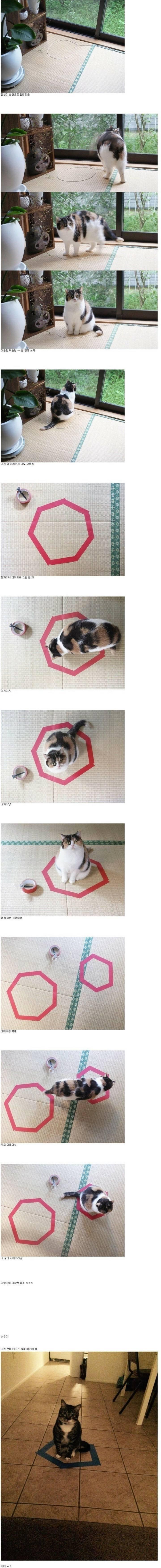 고양이를 포획하는 방법 | 인스티즈