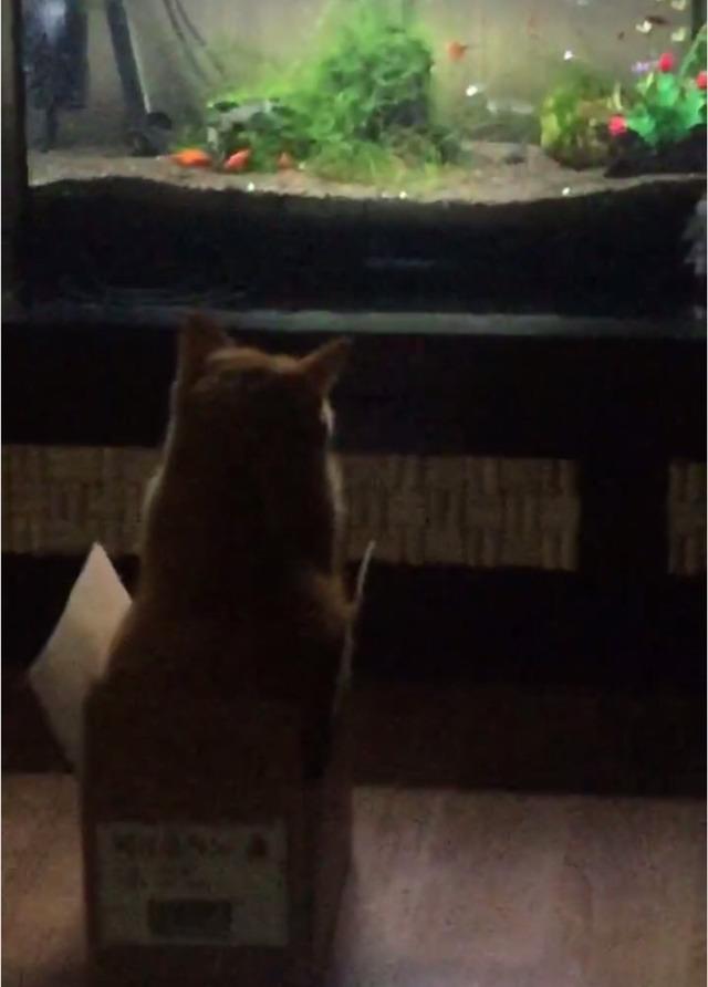 우리집 고양이 밤샜나봐 어뜨케   인스티즈