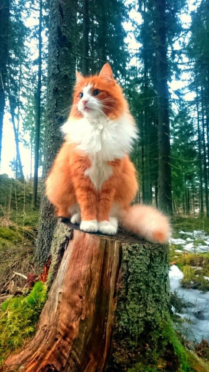 노르웨이 숲에서 우연히 발견된 고양이 | 인스티즈