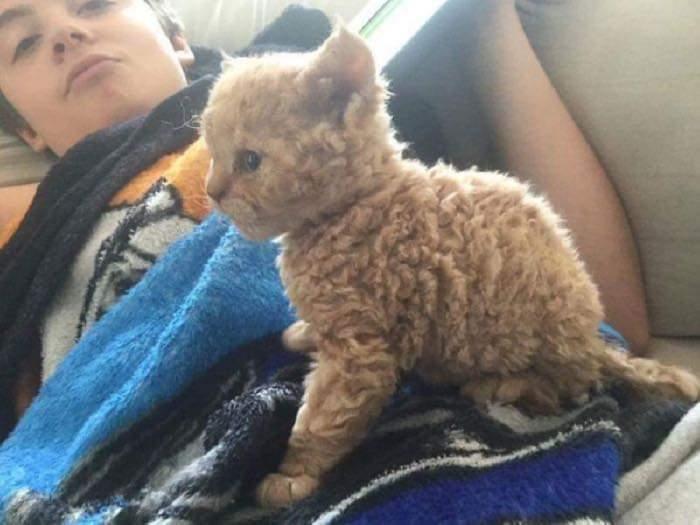 푸들같이 털이 자란 고양이.jpg | 인스티즈