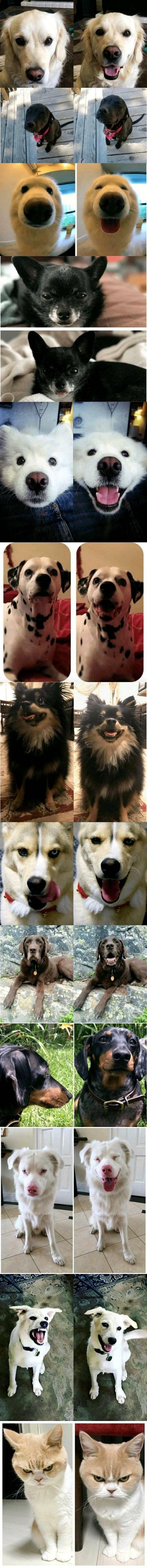 칭찬받은 강아지들 표정변화 존귀탱 | 인스티즈