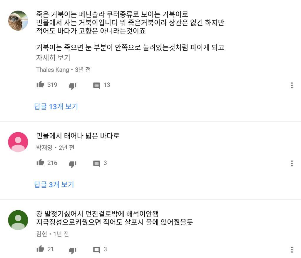 거북이 장례식해준 유튜버... 논란...jpg | 인스티즈