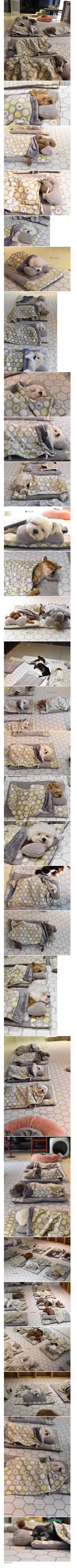 강아지 유치원 낮잠시간.jpg | 인스티즈