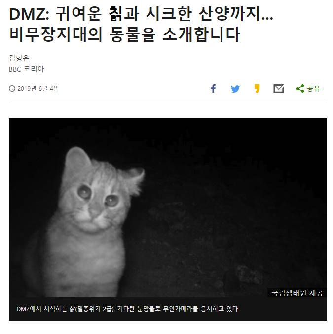 DMZ에 서식하는 귀여운 칡.jpg   인스티즈