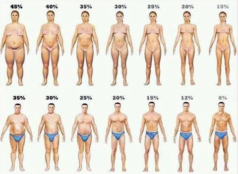 같은 몸무게 체지방률에 따른 몸매 | 인스티즈