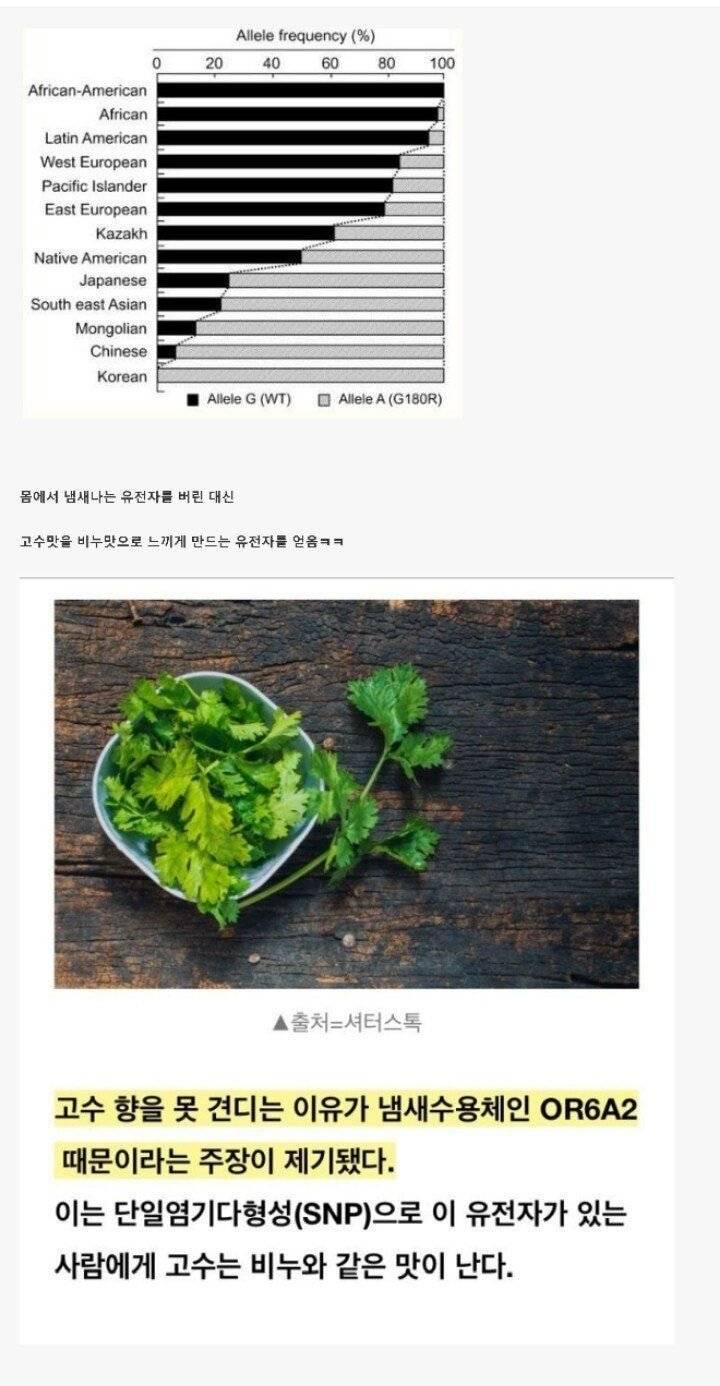 한국인이 냄새나는 유전자를 버린 대신 얻은것 | 인스티즈
