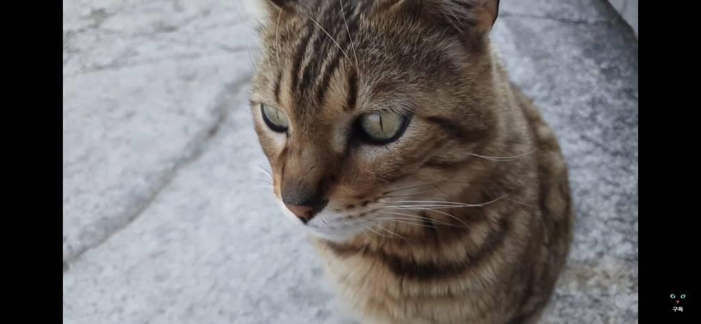 간식 먹기 전이랑 후가 너무 다른 고양이.. 냥성ㄷㄷㄷ   인스티즈