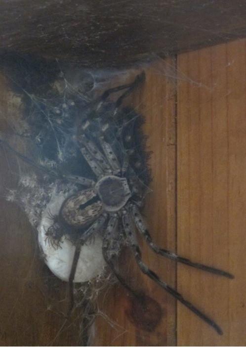 놀랍게도 한국에 사는 거미 | 인스티즈