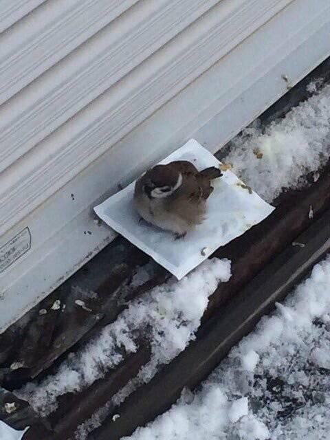 겨울철 길가에 핫팩을 버리면 안되는 이유.jpg | 인스티즈