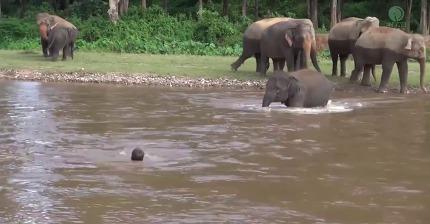 사람이 물에 빠졌다고 생각한 아기 코끼리 | 인스티즈