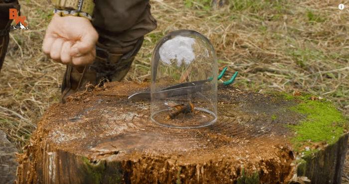 일부러 장수말벌에게 쏘여보는 미국 유투버 | 인스티즈