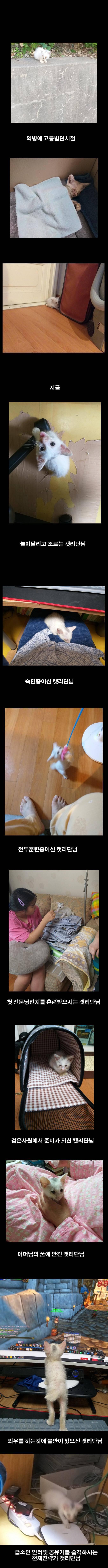 역병고양이를 주워서 휴재하는 만화 | 인스티즈