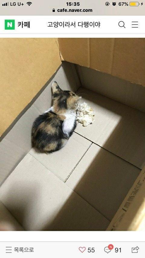 고양이를 데려 왔는데 밥을 안먹습니다.jpg   인스티즈