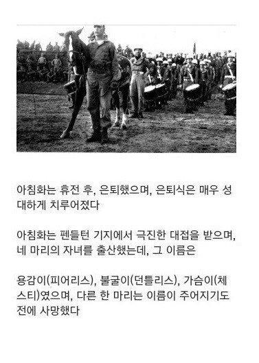6.25전쟁때 활약한 군마 | 인스티즈