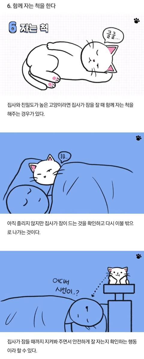 고양이가 당신을 아기로 여긴다는 증거 | 인스티즈